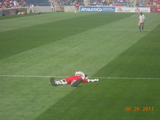 Sparky, Chicago Fire mascot taking a quick break midfield at Toyota Park